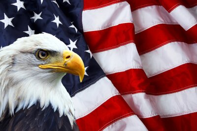 Sticker North American Bald Eagle on American flag