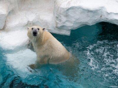 Sticker Northern polar bear