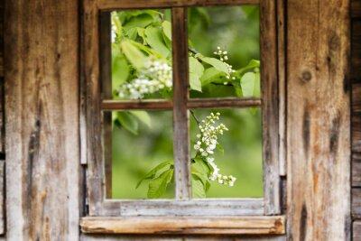 Sticker Old wooden window frame, spring, flowering trees.