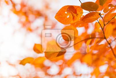 Sticker Orange autumn leaves