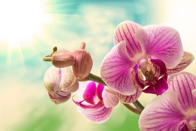 Sticker Orchid flower close up