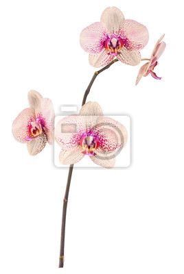 Orchid flowers_7