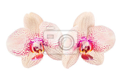 Orchid flowers_8