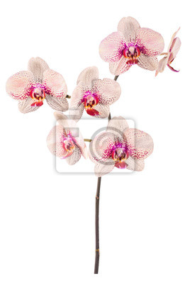 Orchid flowers_9