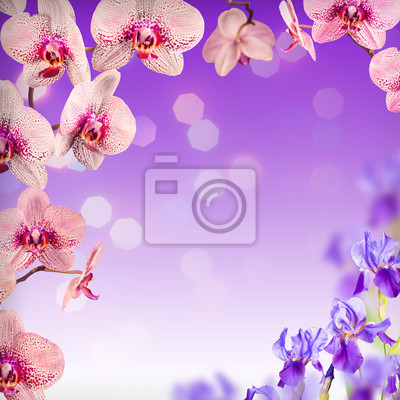 Sticker Orchid flowers background