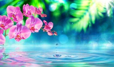 Sticker orchid in zen garden with droplet on pond