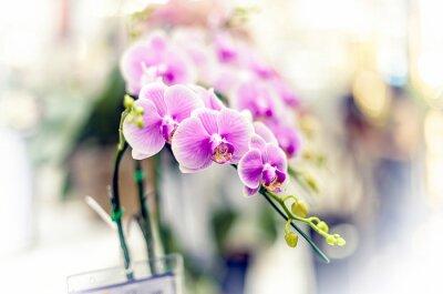 Sticker Orchids