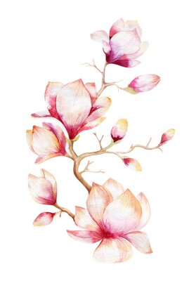 Sticker Painting Magnolia flower wallpaper. Hand drawn Watercolor floral