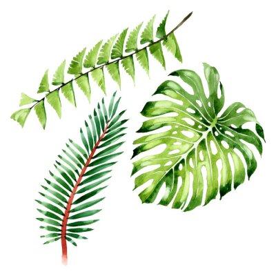 Sticker Palm beach tree leaves jungle botanical. Watercolor background illustration set. Isolated leaf illustration element.