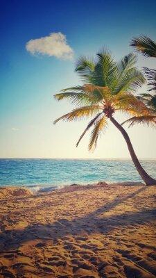 Sticker Palm tree on a tropical island