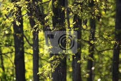 paysage d'arbres de printemps