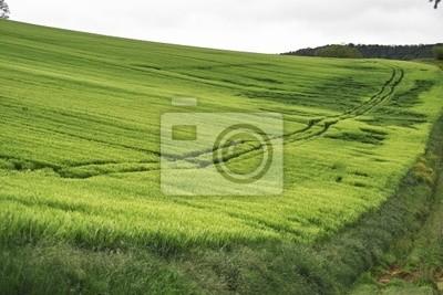paysage de prairie