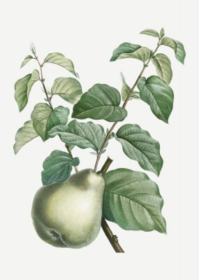 Sticker Pear on a branch