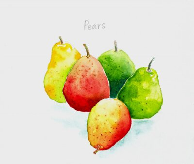 Sticker pears'watercolor painted