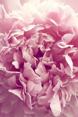 Sticker Peony flower
