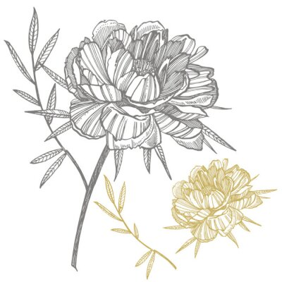 Sticker Peony flower and leaves drawing. Hand drawn engraved floral set. Botanical illustrations. Great for tattoo, invitations, greeting cards