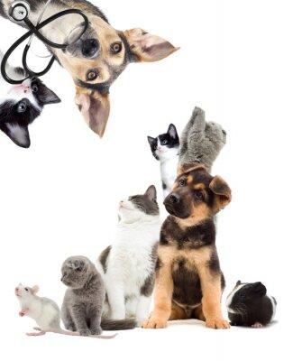 Sticker Pets  looking