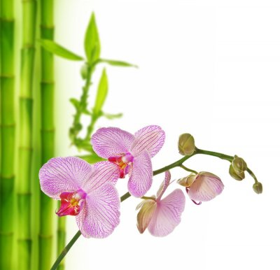 Sticker pink orchid and bamboo - spa background