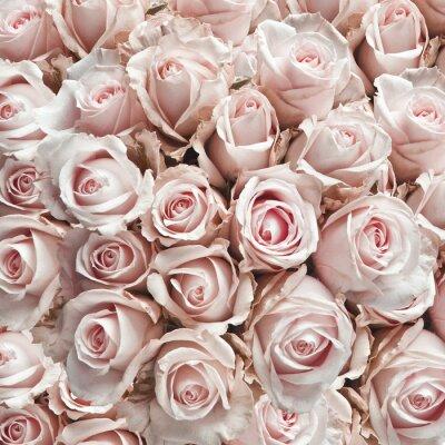 Sticker Pink vintage roses