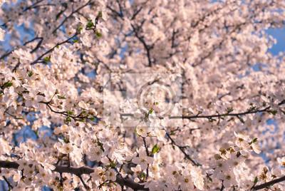 Plum flowers background_2