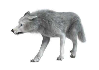Sticker Polar Wolf on White