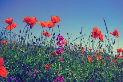 Sticker Poppy flowers against the sky