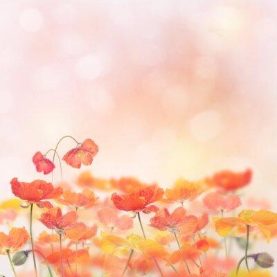 Sticker Poppy Flowers Blossom