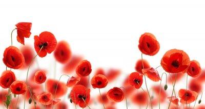 Sticker Poppy flowers isolated on white background