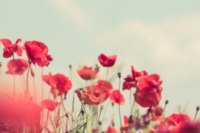 Sticker Poppy flowers retro peaceful summer background