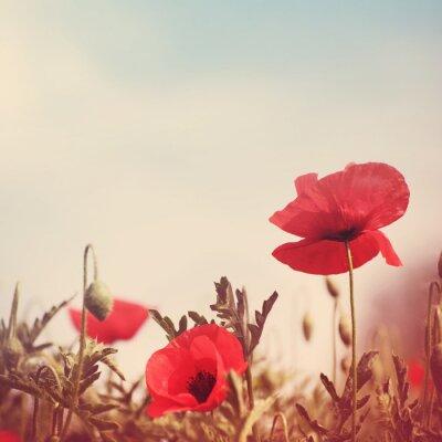 Sticker poppy flowers retro stylized image