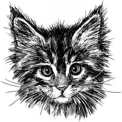 Sticker portrait of cat