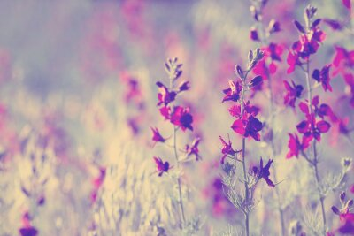 Sticker purple wild flowers