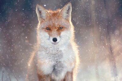 Sticker red fox in winter forest Pretty