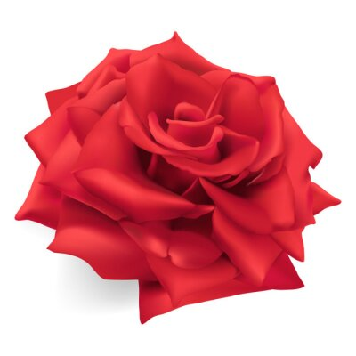 Sticker Red Rose. Hand drawn vector illustration of a red rose, the queen of roses, symbol of love, courage, compassion.