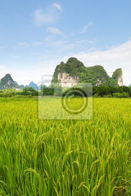 Sticker rice fields and karst mountains in southern china