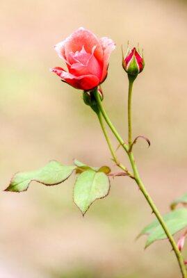 Sticker rose champêtre