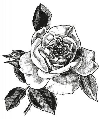 Sticker rose hand drawing