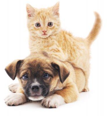 Sticker Rred kitten in puppy.