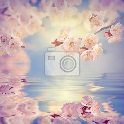 Sakura branch reflected in water_1