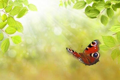 Sticker Schmetterling 206