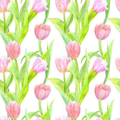 Sticker seamless texture with elegant tulips for your design. watercolor painting