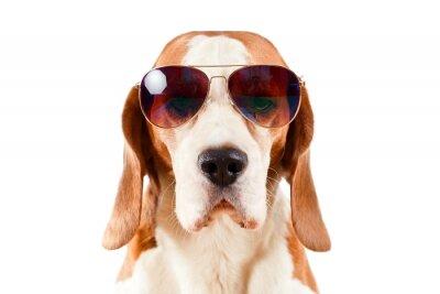 Sticker sentry dog in sunglasses  on white