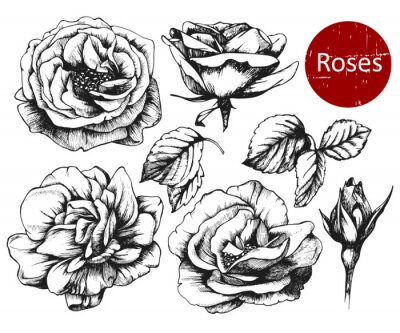 Sticker Set of highly detailed hand drawn roses. Vector
