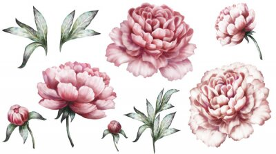 Sticker Set vintage watercolor elements of pink peonies, collection garden flowers, leaves, illustration isolated on white background. bud and leaf, peony