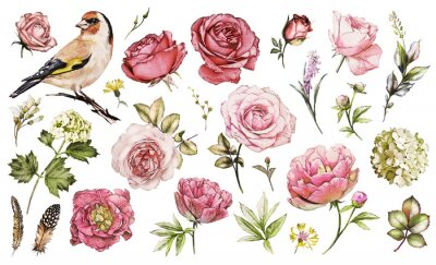Sticker Set watercolor elements of flower rose, peonies, hydrangea, collection garden and wild flowers, leaves, branches, illustration isolated on white background, bird - goldfinch, pink  bud
