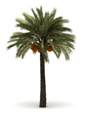 Sticker Single Palm Tree