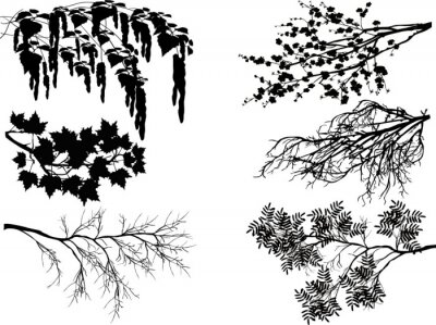 Sticker six spring tree branches on white