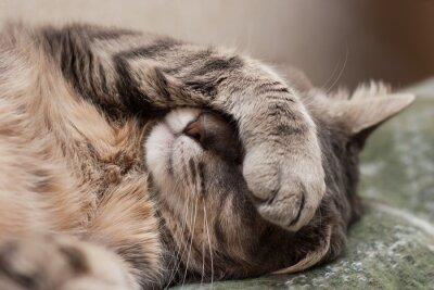 Sticker sleeping cat