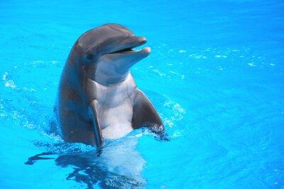 Sticker Śmiejący się delfin w Loro Park na Teneryfie