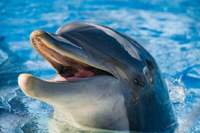 Sticker smile of a dolphin looking at you